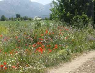 Walking trails on Crete
