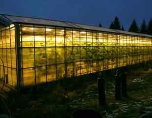 Glasshouse-in-Iceland-