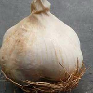 Oct-garlic