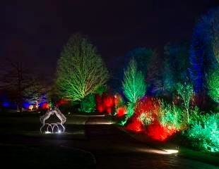 Harlow Carr Glow Boxing Hares 310