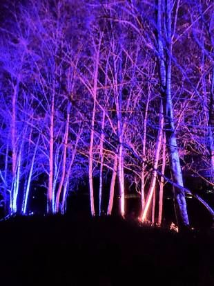 Harlow Carr Glowing trees