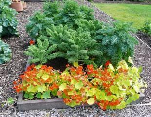 colourful veg plot