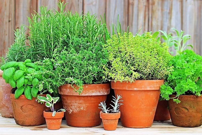 A container herb garden