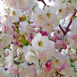 spring blossom-1 (2)