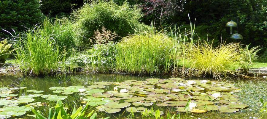 inspiring pond