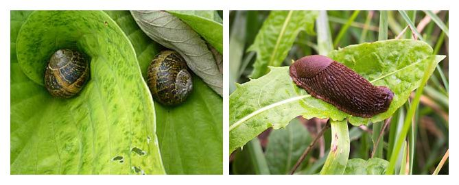 slugs and snails together