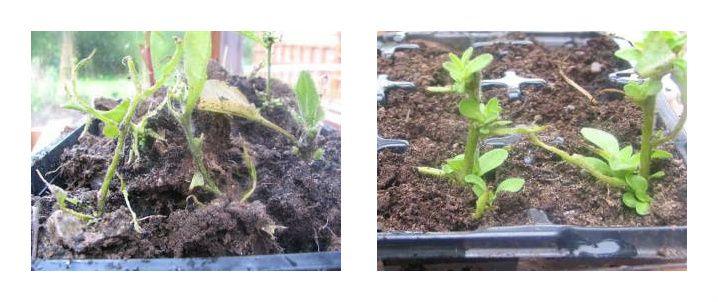 combine_images slug plants