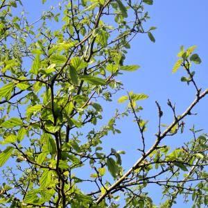 banner new leaves