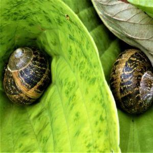 too-many-snails 300