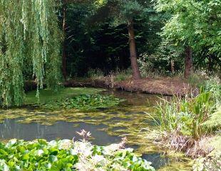restful pond