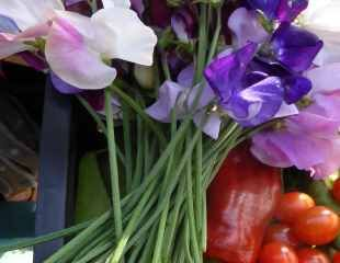 Straight stems on sweet peas