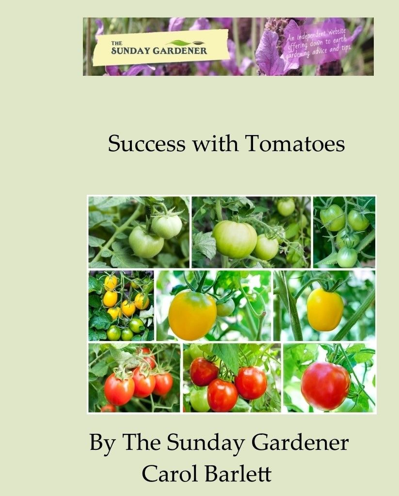 sucess with tomatoes cover