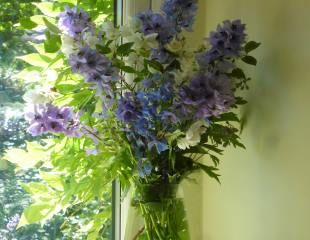 home grow flowers Delphiniums in vase