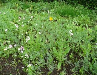 step 6 of wildflower meadow early plant growth