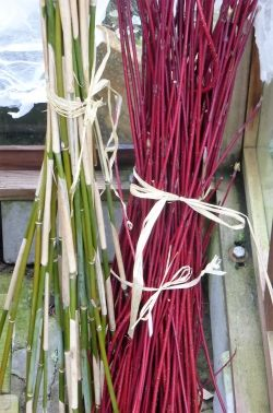 Cornus and bamboo cuttings