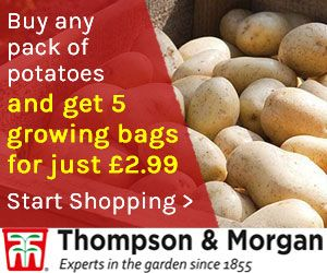 Growing potatoes in containers T & M offer