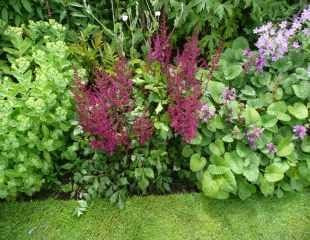 Red Astilbe planted in mixed border