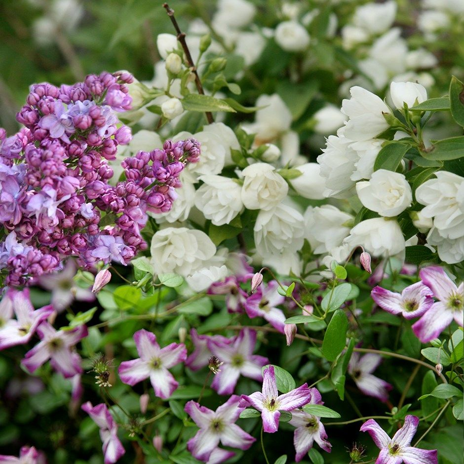 Scented border collection