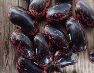runner bean seeds