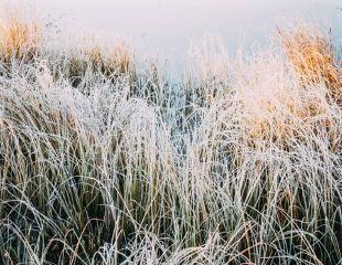 grasses with winter sun