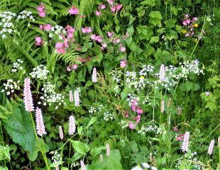 A wild garden