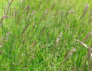 Long lawn