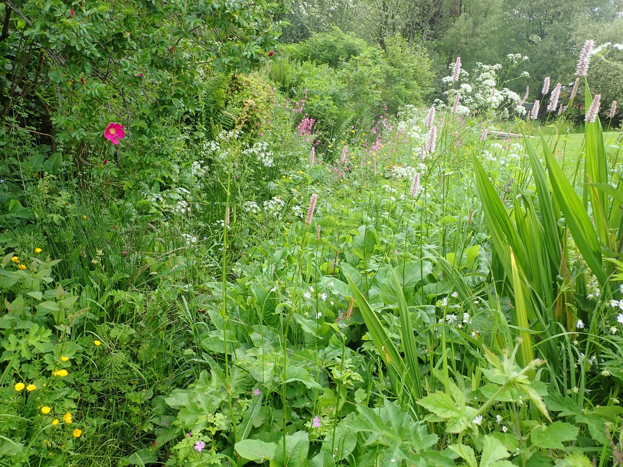 Wild area in the garden