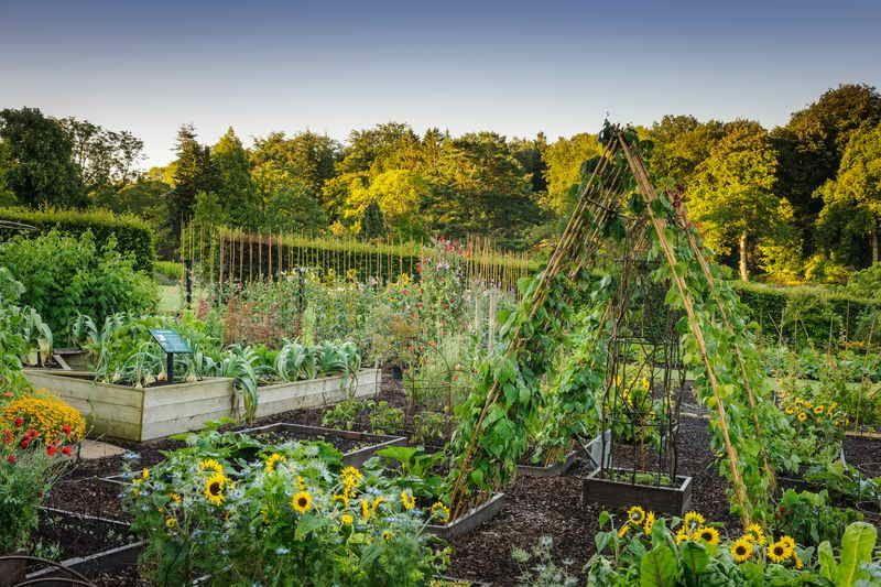 RHS Harlow Carr The Kitchen Garden credit Jason Ingram