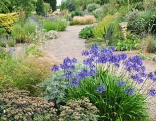 Beth Chatto gravel garden