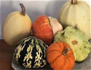 A Display of Colourful Autumn squashes