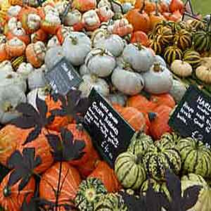 ornamental-gourds-300x300-s