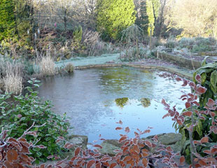 Frozen pond in Winter