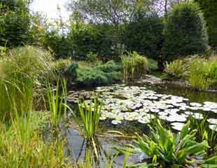Mature large pond