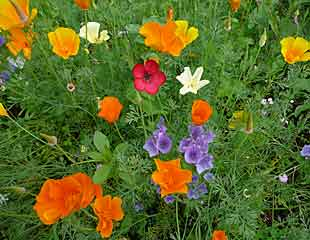 Wild flower patch