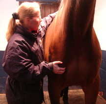 Horse pic 2