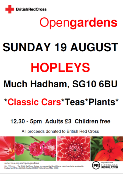 Much hadham open garden