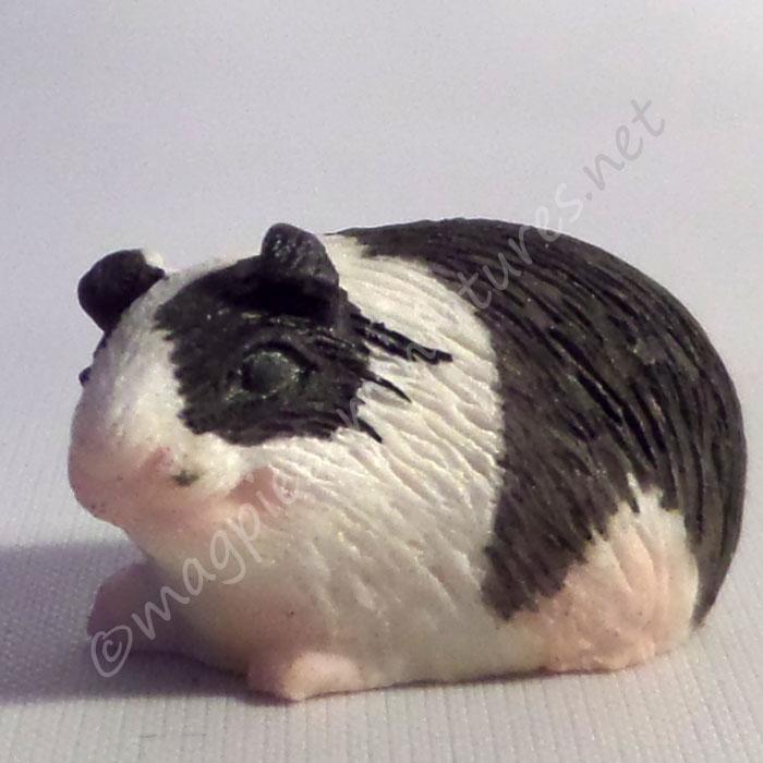 Guinea Pig -a