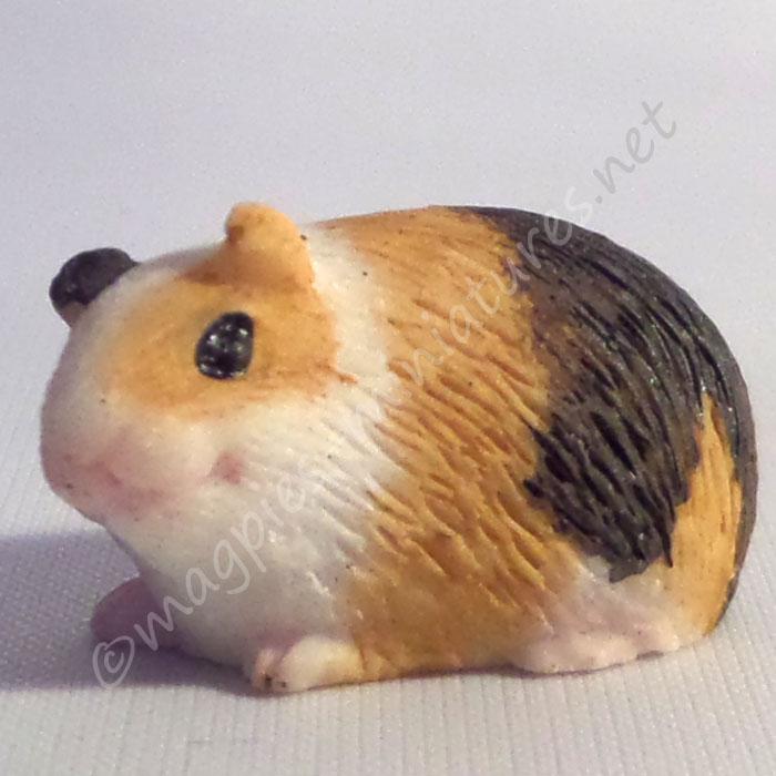 Guinea Pig -c
