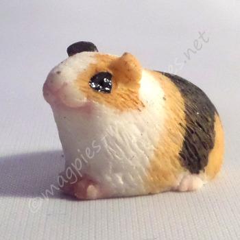 Guinea Pig -F