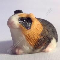 Guinea Pig -g