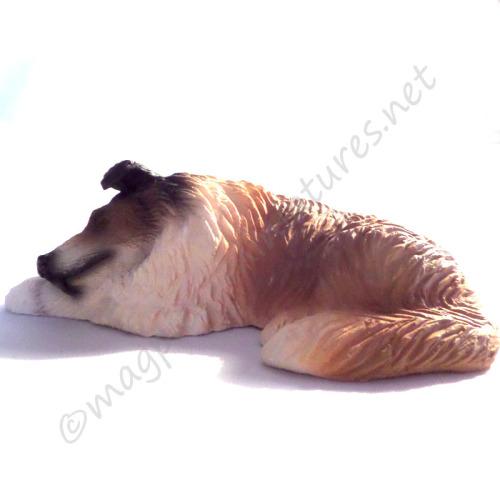 Sleeping Collie Dog