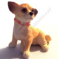 Chihauhua Dog