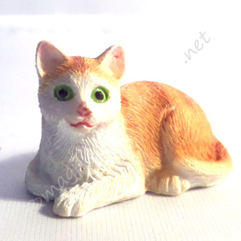 Ginger and White Cat B