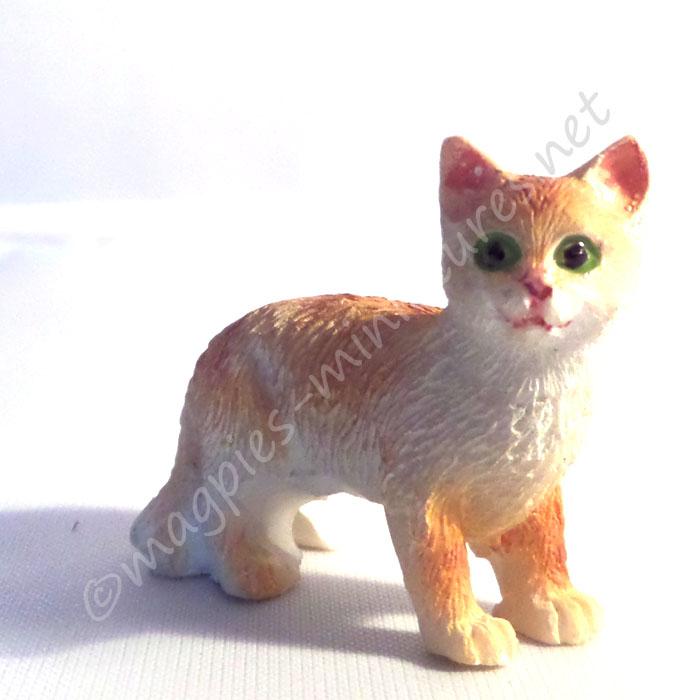 Ginger and White Cat C