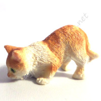 Ginger and White Cat D