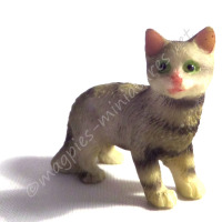 Tabby Cat C