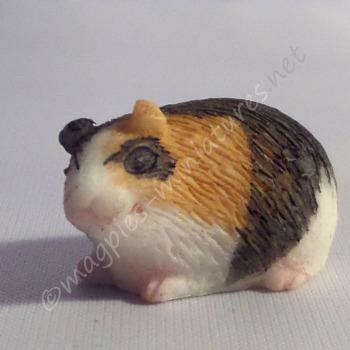 Guinea Pig -d