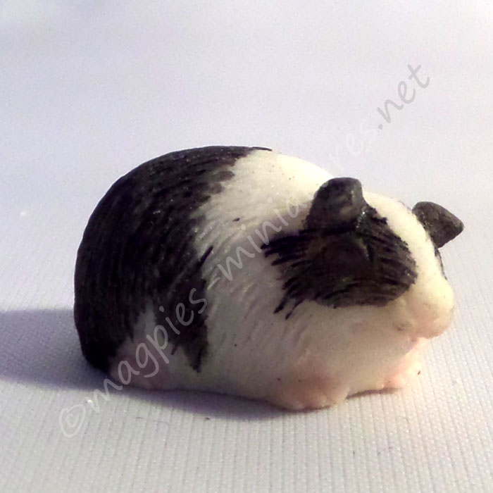 Guinea Pig - i