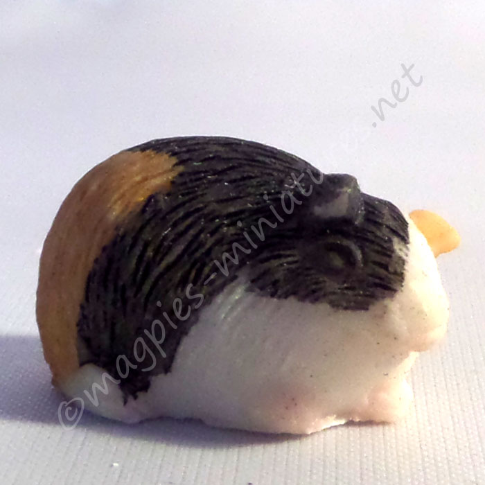 Guinea Pig -j