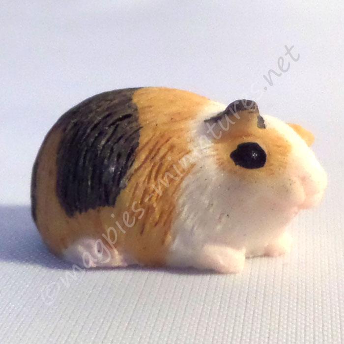 Guinea Pig -k